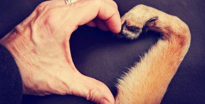 Il cane è davvero il miglior amico dell'uomo